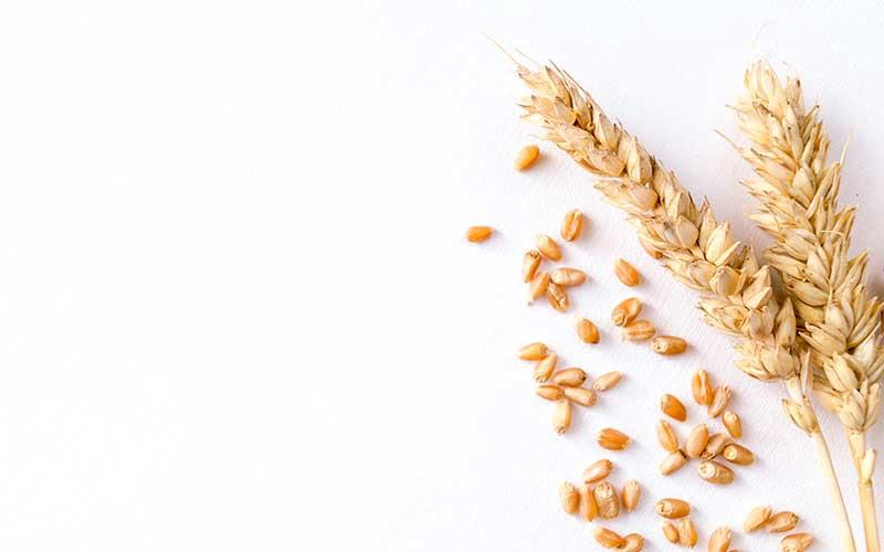 Buğdayın faydaları